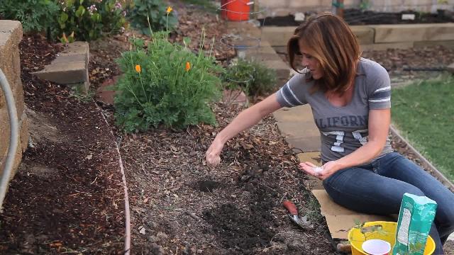 Tomatoe Planting Hole Recipe Calikim Garden Home Diy