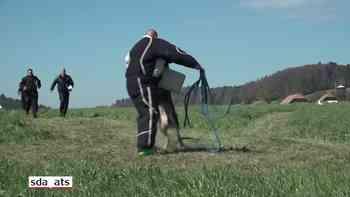 Höchste Disziplin an den Polizeihunde Schweizermeisterschaften