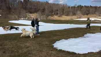 30 Hunde toben sich Mitte März 2017 auf dem Weissenstein aus