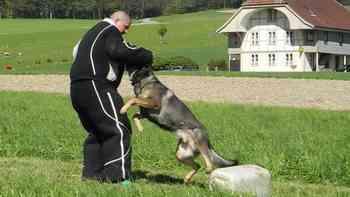 An den Polizeihunde-Schweizermeisterschaften in Lüterkofen SO: Wie die Disziplin Schutzdienst samt Bewertung abläuft.