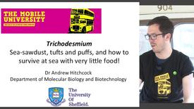 Thumbnail for entry Trichodesmium: Sea-sawdust, tufts and puffs, and how to survive at sea with very little food!