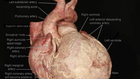 Thumbnail for entry Heart: horizontal rotation