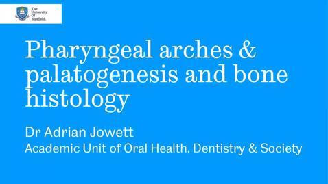 Thumbnail for entry Pharyngeal arches webinar