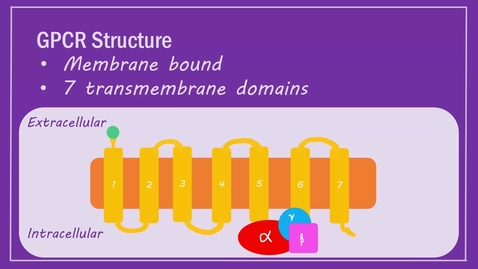 Thumbnail for entry GPCR Signalling