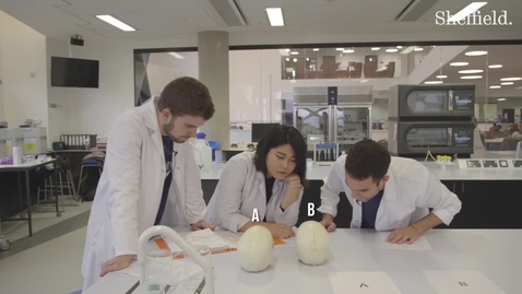 Thumbnail for entry Our demonstrators investigate: identifying the sex of a skull
