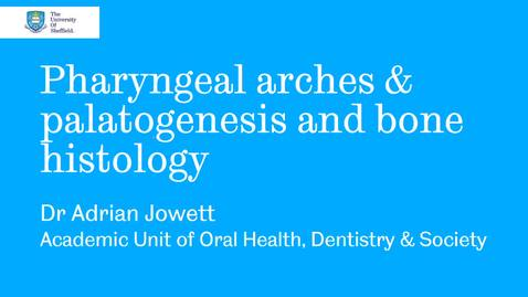 Thumbnail for entry Introduction: Pharyngeal arches and Palatogenesis Histology