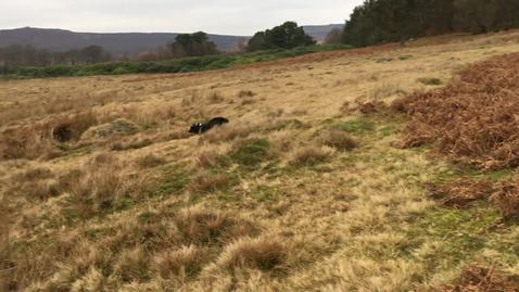 Thumbnail for entry Ziggy at Longshaw