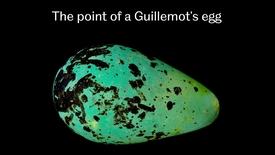 Thumbnail for entry The evolution of egg shape in birds