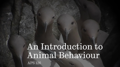 Thumbnail for entry An introduction to Animal Behaviour with Professor Tim Birkhead.
