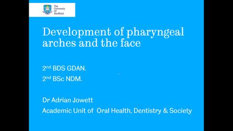 Thumbnail for entry Development of pharyngeal arches and the face 1