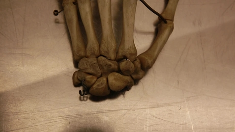 Thumbnail for entry 29-A Carpal bones