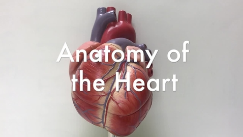 Thumbnail for entry The Anatomy of the Heart
