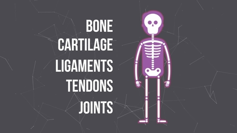 Thumbnail for entry What is the Musculoskeletal System?
