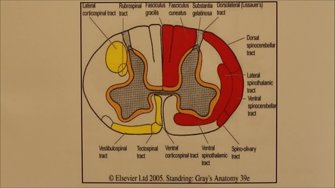 Thumbnail for entry 23-L sensory pathways of the spinal cord