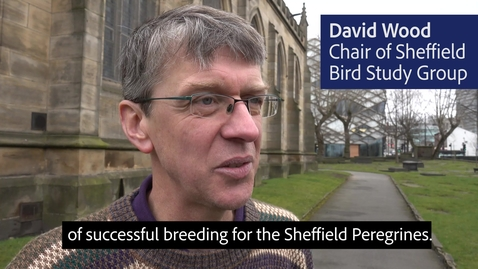 Thumbnail for entry Sheffield Peregrines 2018
