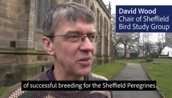 Sheffield Peregrines