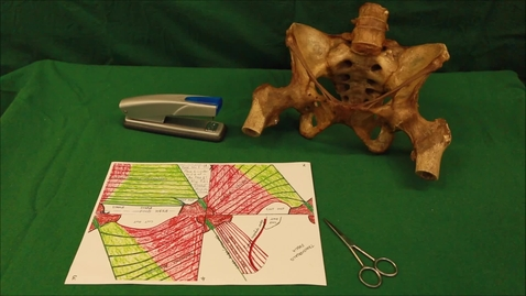 Thumbnail for entry 24-D inguinal canal paper model