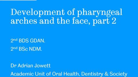 Thumbnail for entry Development of pharyngeal arches and the face, part 2