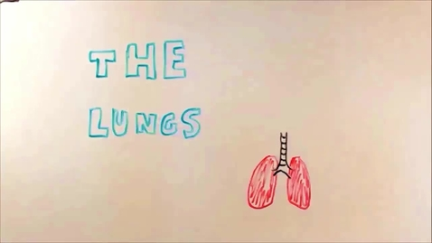 Thumbnail for entry The Lungs