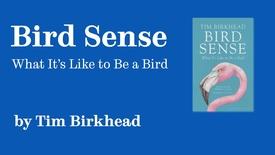Thumbnail for entry Sheffield Authors Showcase - Tim Birkhead - Bird Sense