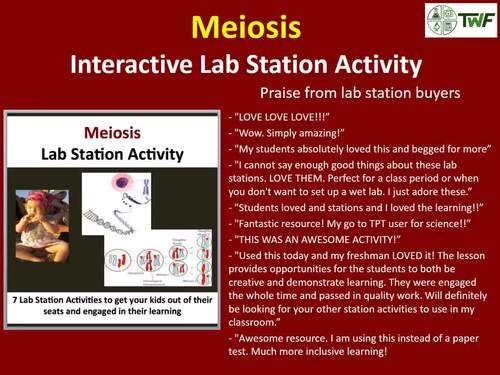Meiosis - 7 Lab Station Activities