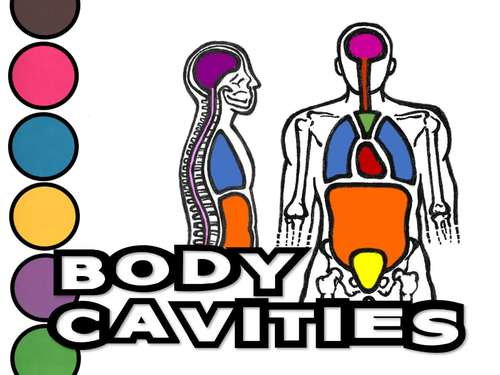 Body Cavities- PowerPoint, Notes Worksheet and Activity Page!