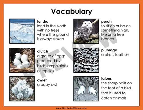 Snowy Owl Reading Comprehension for Google Classroom