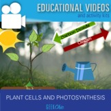 Plant Cells to Systems: Photosynthesis Video & Activities