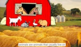 Farm Animals 1: Sheep, Pig, Cow, Chicken