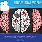 Growth Mindset - Brain Science / Anatomy How does the brai