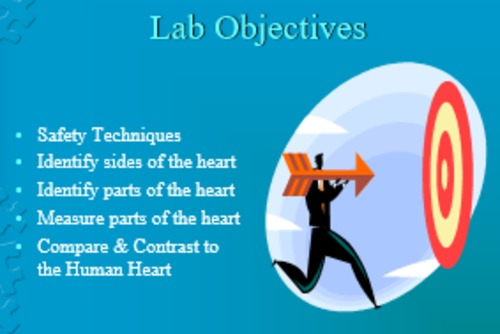 Heart Dissection Lab Bundle