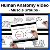 Human Anatomy - Muscle Groups Video (Worksheet included)