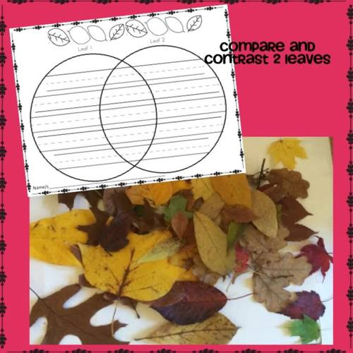 Leaf Activities for Fall