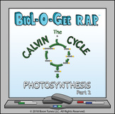 Photosynthesis, Part 2: The Calvin Cycle -Biol-O-Gee R.A.P.