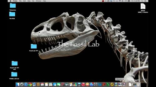 Fossil Lab NEW! / Distance Learning
