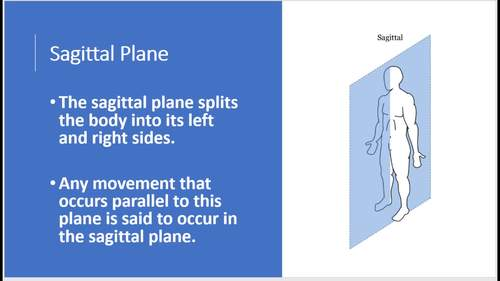 Musculoskeletal System Anatomy and Physiology Powerpoint Lesson   TpT