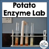 Testing Enzymes Lab Activity - Potato Catalase