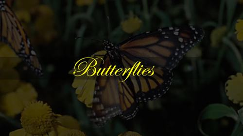 Butterflies - An Intermediate Level Piano Study