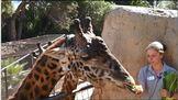 Animal Chat: Giraffe Edition
